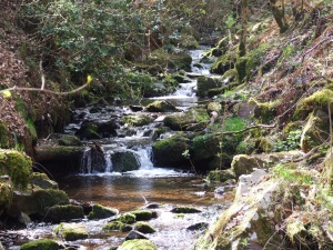 An Exmoor river: bubbly and exciting but not yet grown up. Rather like UKIP in fact.